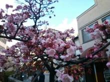 第4回糸川桜まつり