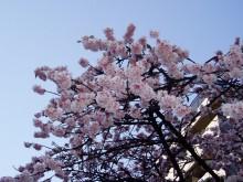 あたみ桜糸川桜まつり「謝恩デー」