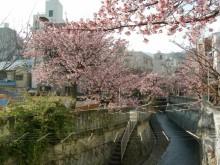 糸川桜まつり「謝恩デー」